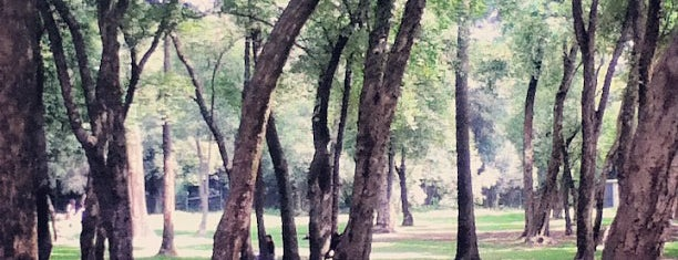 Bosque de Chapultepec is one of Dorilocos.