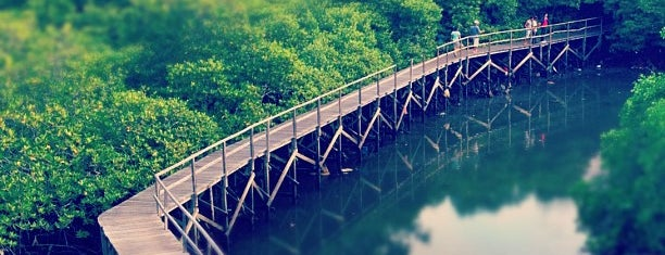 Mangrove Forest Conservation is one of Bali.