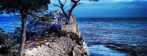 The Lone Cypress is one of Going Back To Cali...Again.