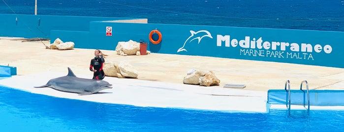 Mediterraneo Marine Park is one of Malta.