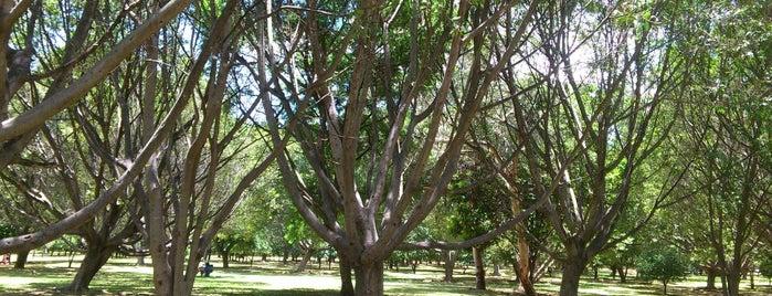 Bosque El Tequio is one of Locais curtidos por Restaurante Catedral.