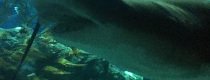 Shark Mystique is one of Orte, die See Mei gefallen.