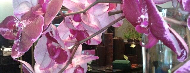 The Enchanted Florist is one of Alexandria, VA.