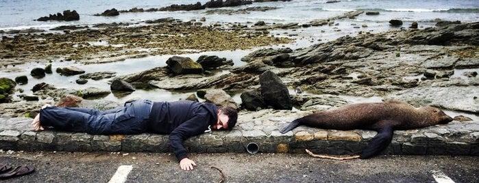 Seal Colony is one of Nuova Zelanda.