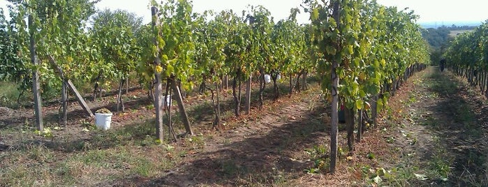Rechtoríkov vinohrad is one of Posti che sono piaciuti a Peter.
