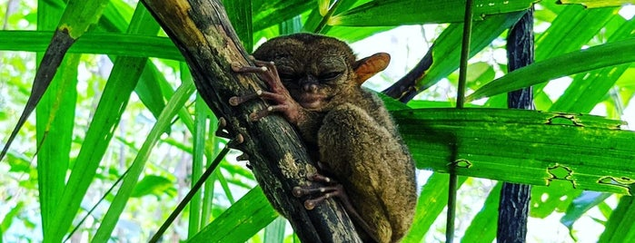 The Philippine Tarsier Conservatory is one of World Traveling via Instagram.