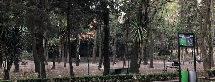 Parque para perros - Parque Hundido is one of Parques Cd de México.