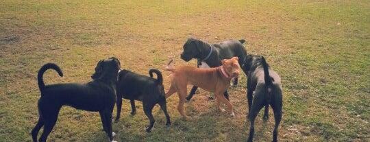 Springfield Confederate Dog Park is one of Lugares favoritos de Elle.