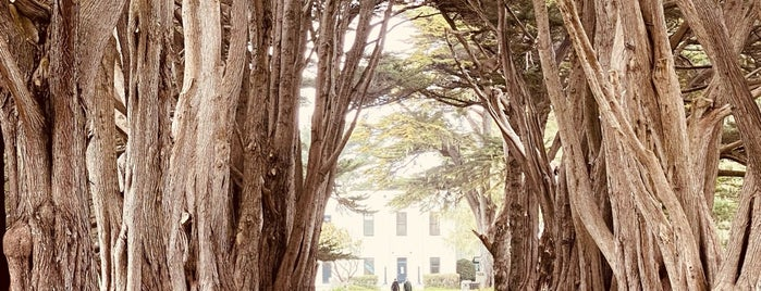 Cypress Tree Tunnel is one of **Point Reyes.