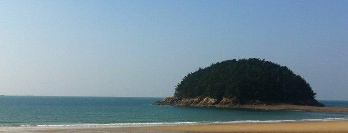 천리포수목원 is one of Local.