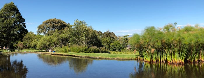 Kirstenbosch Botanical Gardens is one of Cape Town 2018.