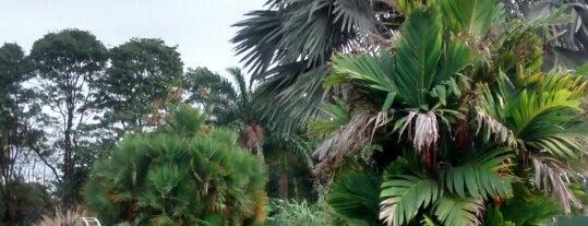 Instituto Plantarum is one of Campinas.
