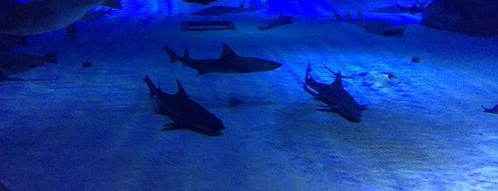 Antalya Aquarium is one of Jack 님이 좋아한 장소.