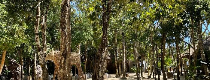 Papaya Playa Beach Club is one of Tulum.