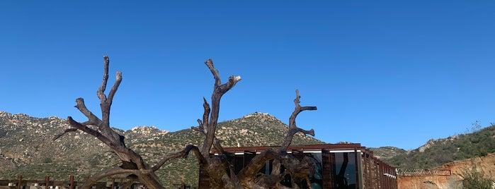 Bruma is one of Valle de Guadalupe.