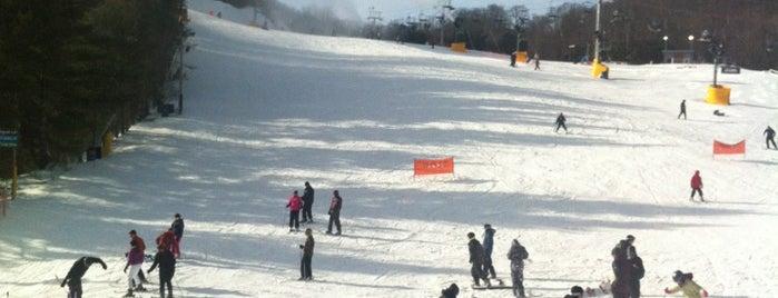 Cataloochee Ski Area is one of สถานที่ที่ David ถูกใจ.