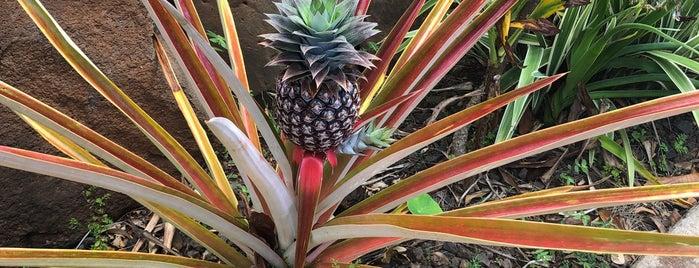 Allerton Botanical Garden is one of Kauai to do.