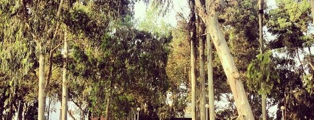 Parque Sur Bosquecito is one of Orte, die Erikito gefallen.
