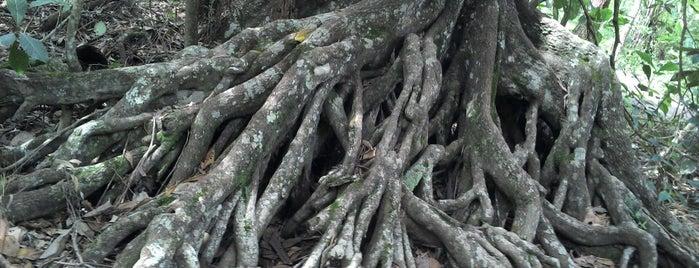 Parque Ecológico Saburo Onoyama is one of Vinicius : понравившиеся места.