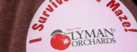 Lyman Orchard Corn Maze is one of Lieux qui ont plu à Ryan.