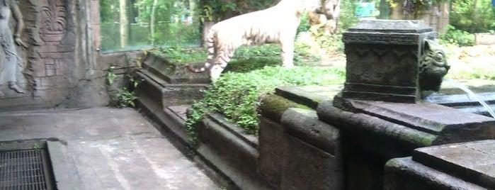 Tiger Cave Restaurant TSI II is one of Orte, die Chloe gefallen.
