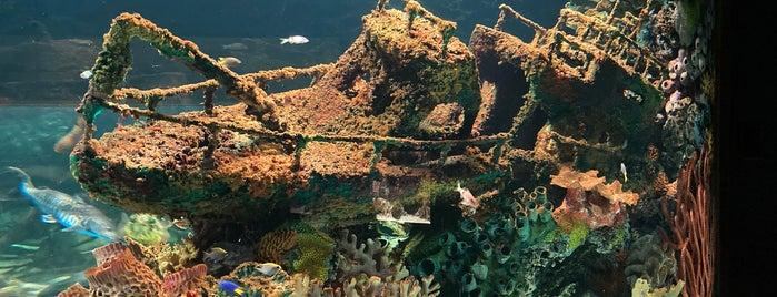 Electric City Aquarium is one of Gotta Go Poconos.