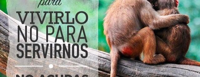 Igualdad Animal - Animal Equality is one of Veggie Restaurants.