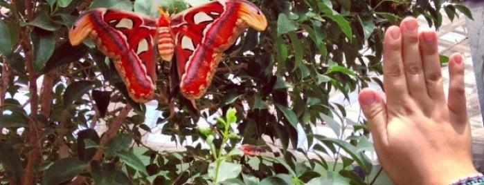 Butterfly Wonderland is one of Phoenix, AZ.