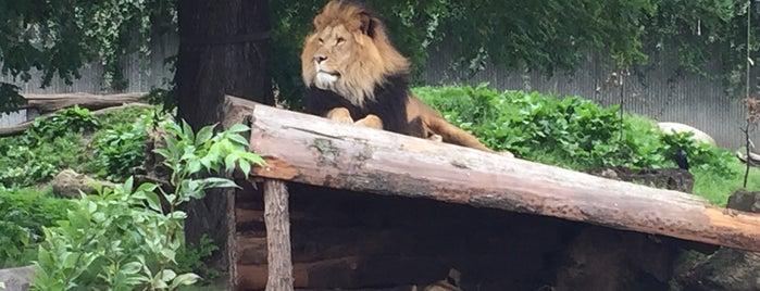 Løverne i Zoo is one of Locais curtidos por Christian.
