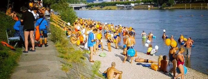 Rheinschwimmen is one of Basel.