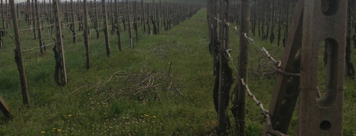 Selva Capuzza is one of Cantine BS.