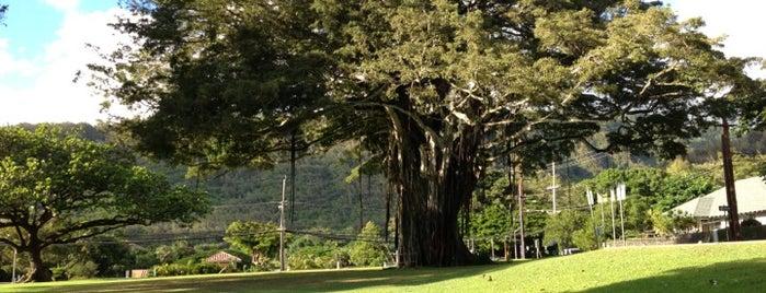 Nuuanu Valley Park is one of Adam 님이 좋아한 장소.