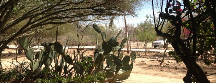 Centro Ecologico de Sonora is one of Tempat yang Disukai Ph.