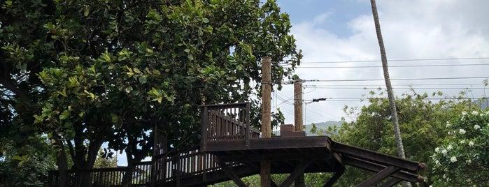 Maui Zipline Company is one of Hawaii 2013.