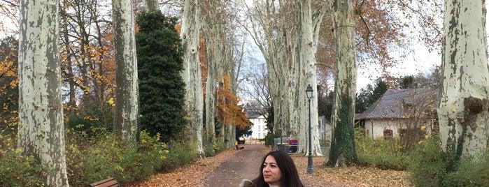 Parc de l'Orangerie is one of Locais curtidos por Gozde.