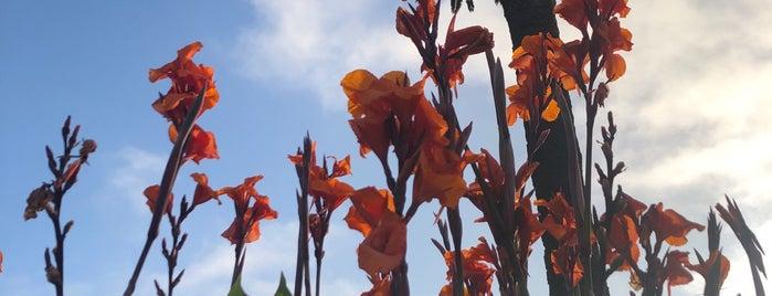 Santa Monica Community Gardens is one of CA.