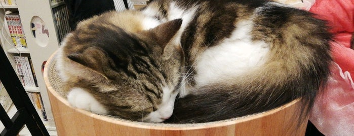 cat cafe にゃんこと is one of Japan.