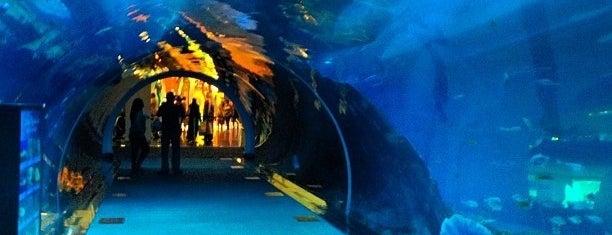 Dubai Aquarium is one of Seyahat.