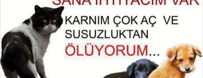Tenis Ve Atıcılık Klübü Ocakbaşı is one of Gaziantep.
