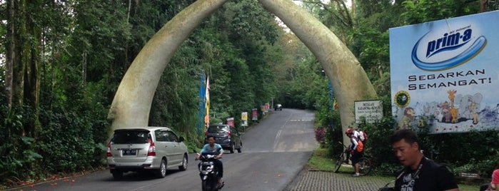 Taman Safari Indonesia is one of Bogor ☺.