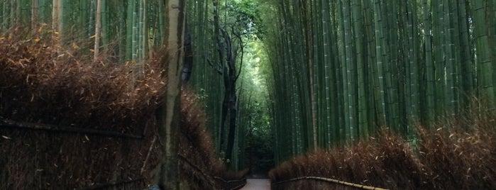 ป่าไผ่คิตะสะงะ is one of Kyoto.