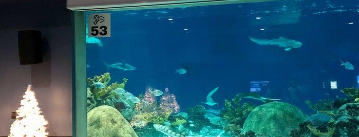 OdySea Aquarium is one of Queen'in Kaydettiği Mekanlar.