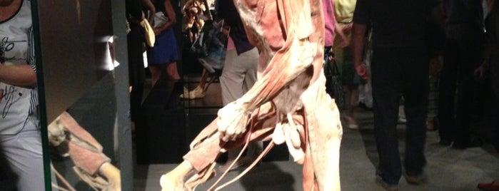 """Выставка """"Тайны тела"""" is one of Lugares favoritos de Alexandra."""