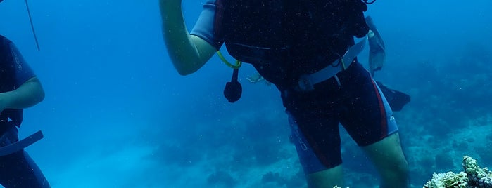 Free Willy Diving is one of Boracay.