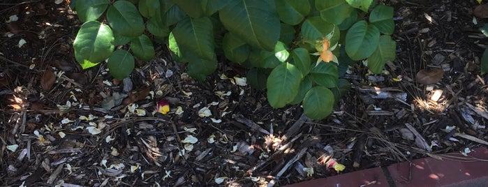 Royal Rosarian Garden is one of Locais salvos de Julie.