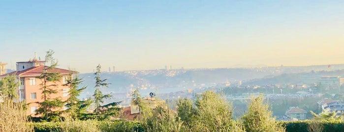 Chado Tea Portofino Eataly is one of Sevinç : понравившиеся места.