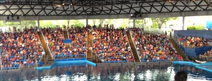 One Ocean is one of SeaWorld San Antonio.