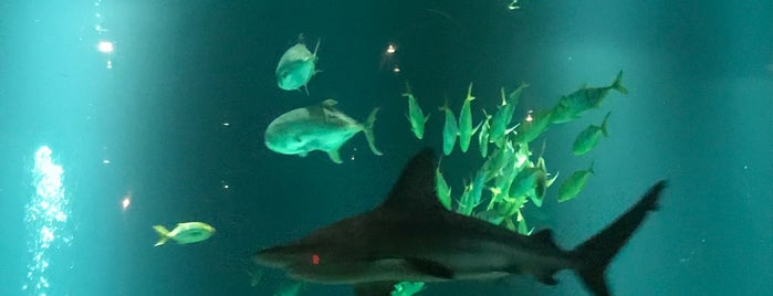 Shark Encounter is one of Claudiaさんのお気に入りスポット.