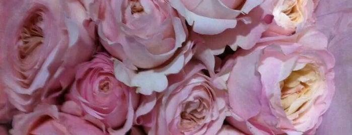 Flores de Holanda is one of Locais salvos de Violeta.