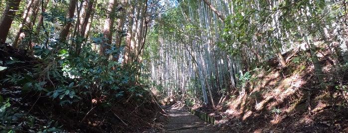 坂(山口)